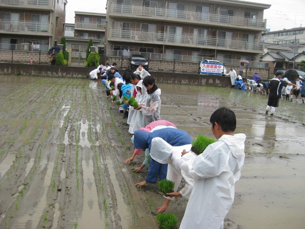 次郎丸中学1年生と田植えを今年も行いましたヨ_a0213879_11335627.jpg