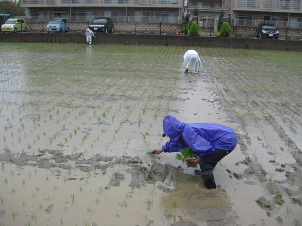 次郎丸中学1年生と田植えを今年も行いましたヨ_a0213879_11342183.jpg