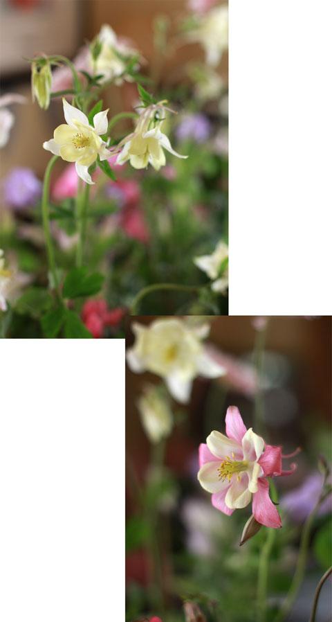 ナチュラルで繊細なお花たち_f0127281_2230816.jpg