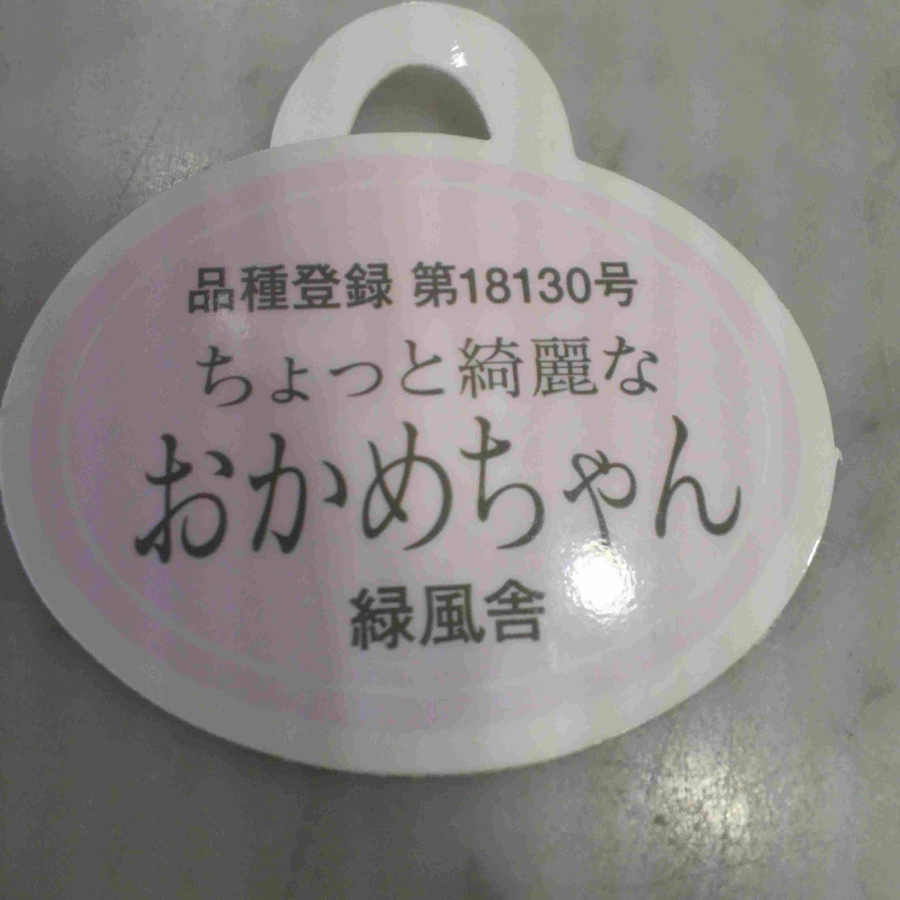 綺麗なおかめちゃん!?_a0221584_1317815.jpg