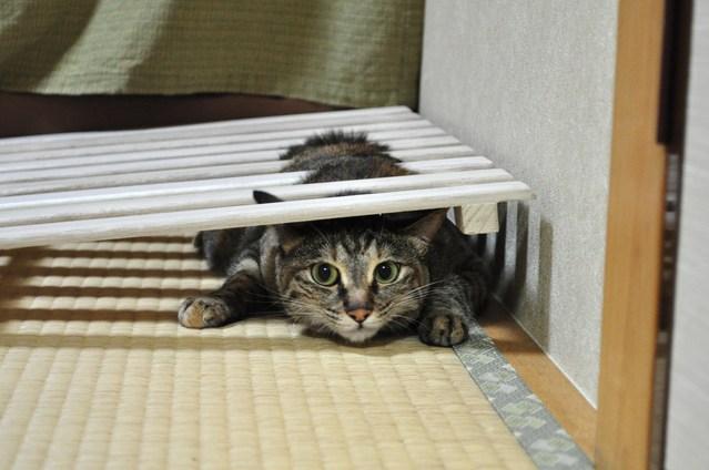 つーちゃんの失敗_a0126590_22373019.jpg