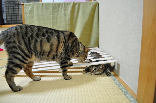 つーちゃんの失敗_a0126590_22413289.jpg