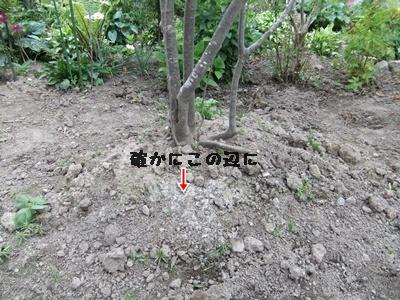 f0215591_843581.jpg