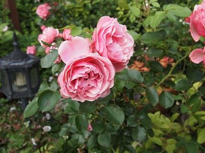2012年茨城のお庭 その17_c0167112_14465633.jpg