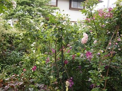 2012年茨城のお庭 その17_c0167112_14481710.jpg