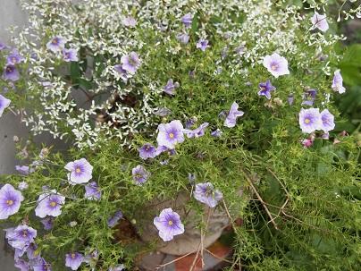 2012年茨城のお庭 その17_c0167112_14491673.jpg