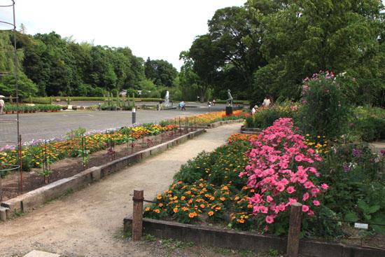 植物園 あじさい園_e0048413_21133028.jpg