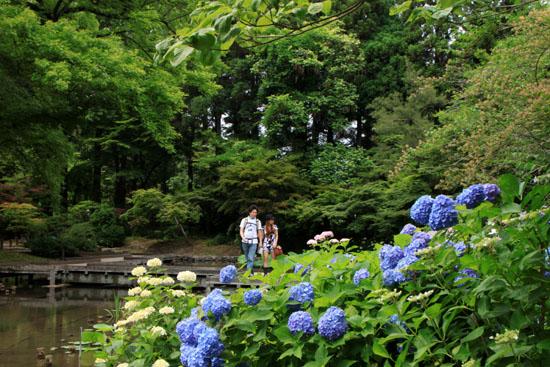植物園 あじさい園_e0048413_2114526.jpg