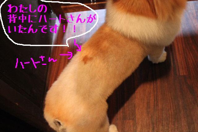 b0130018_14564169.jpg