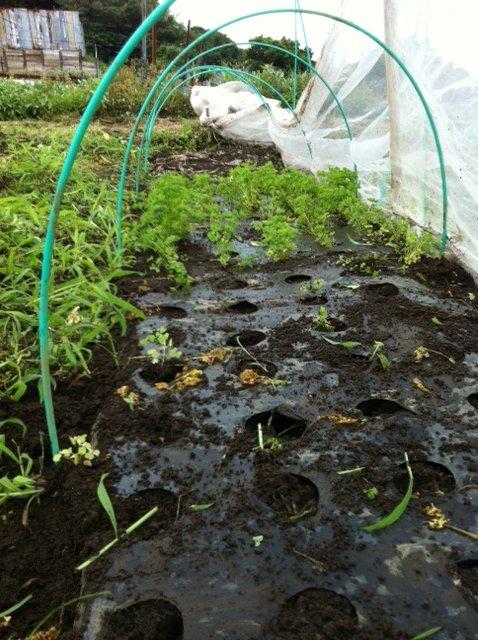 ネギや、バジリコの畝の雑草抜きや バジリコナポレターノの播種_c0222448_1646385.jpg