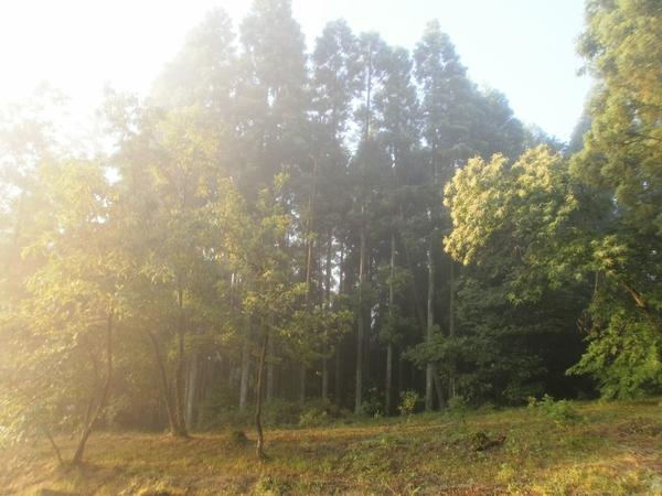 輝きの朝☆_a0174458_6531911.jpg