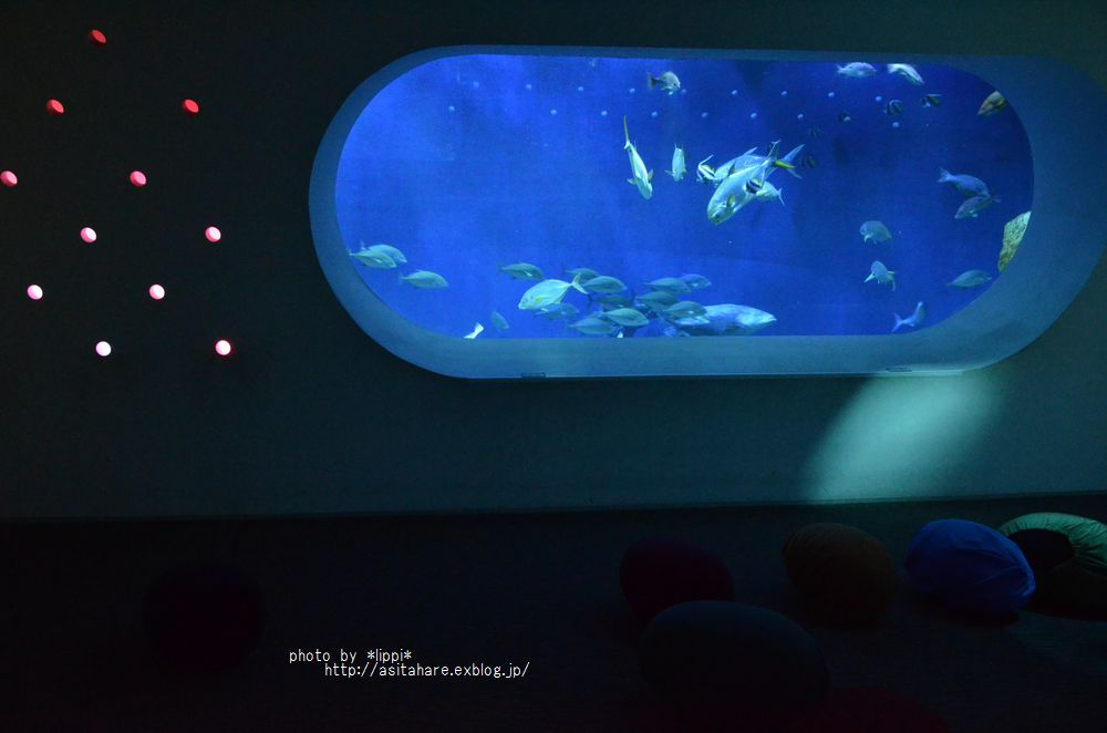 水族館で癒されたい イトヒキアジ_b0024758_042816.jpg