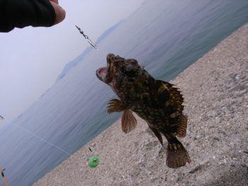 丸亀で釣り_a0007462_817315.jpg