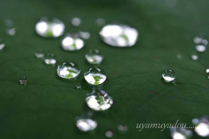 梅雨の恵み_a0157263_23503732.jpg