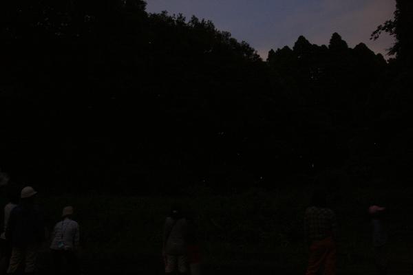 蛍 Firefly_e0231387_1104721.jpg