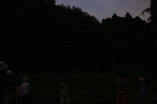 蛍 Firefly_e0231387_1113256.jpg