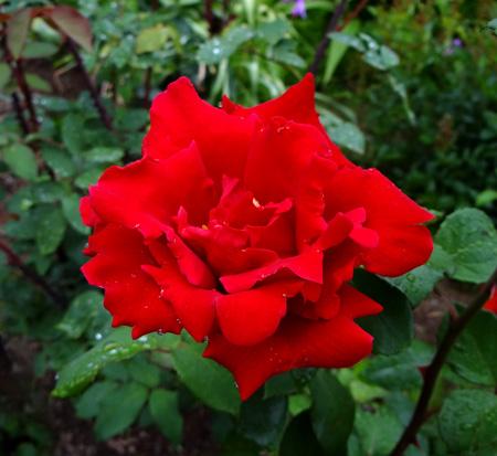 今日もバラの花など~(^^)_a0136293_16343117.jpg