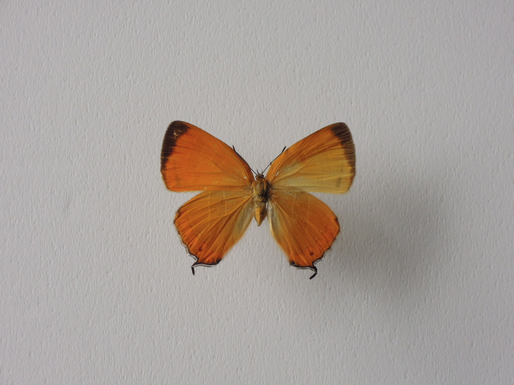 梅雨の合間オレンジ色3種_b0232005_175213100.jpg