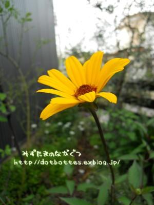 d0170109_512198.jpg