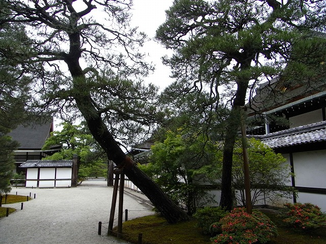 京都視察旅行 PARTⅠ(京都御所)_c0194417_1820733.jpg