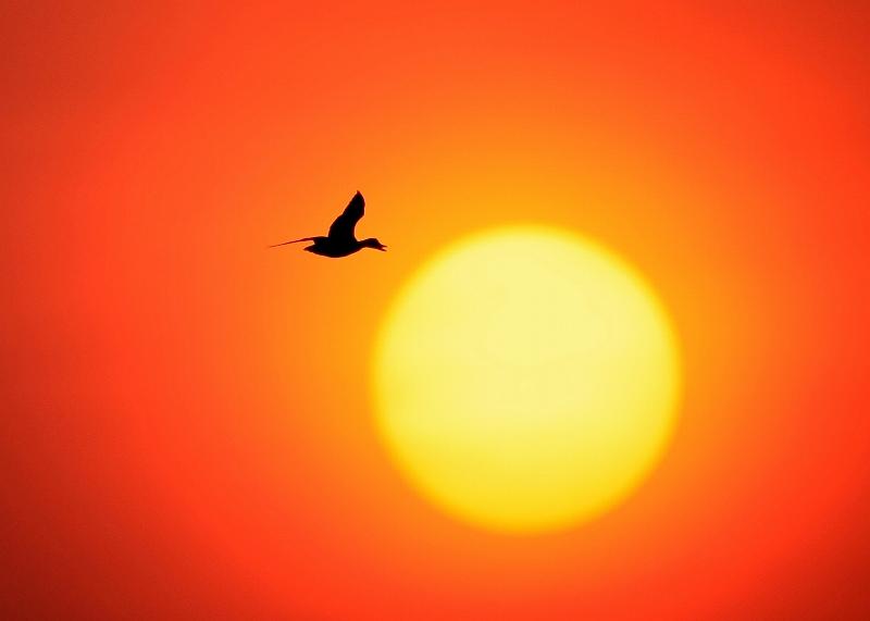 夕陽の中に・・・・・・鳥_d0074828_22202726.jpg