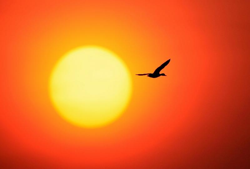 夕陽の中に・・・・・・鳥_d0074828_22204964.jpg