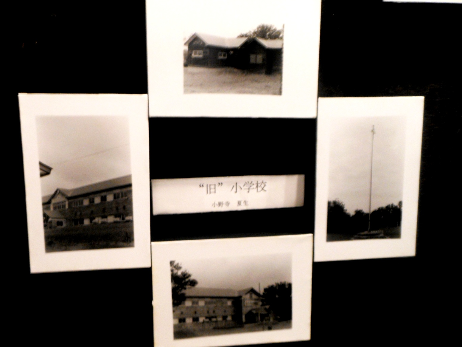 1793) 「札幌大学大学写真部 文連祭」 札幌大学構内 終了・6月16日(土)、17日(日)  _f0126829_10192844.jpg