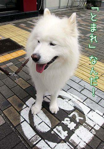日曜朝さんぽ_c0062832_5591231.jpg
