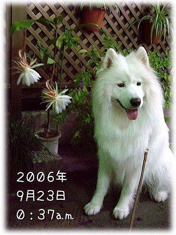日曜朝さんぽ_c0062832_5592367.jpg