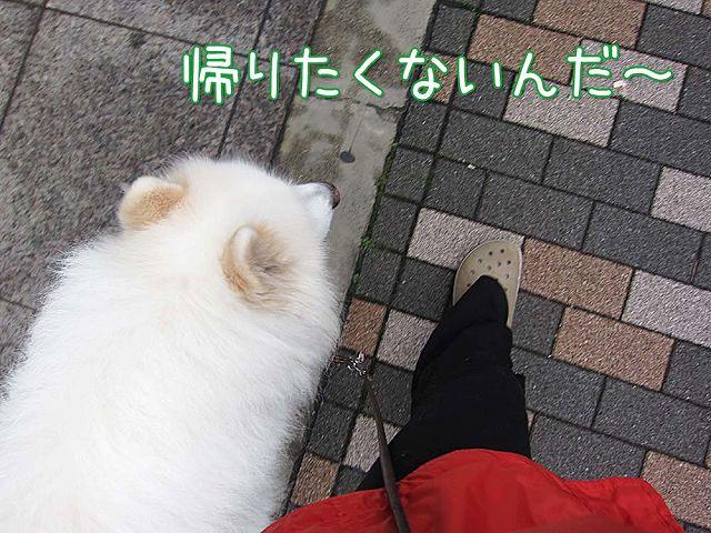 日曜朝さんぽ_c0062832_7144529.jpg
