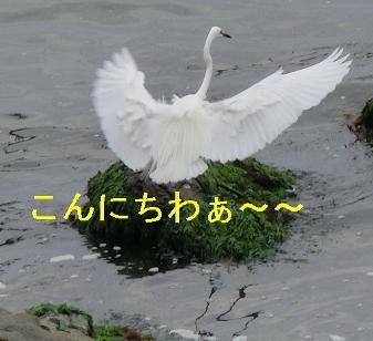 b0165336_17403689.jpg