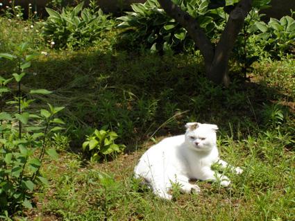 MON  18  JUNE  2012_a0099744_1920918.jpg