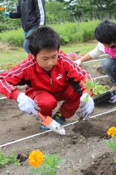 国道4号バイパス沿いを彩る花々 -「小さな親切」運動十和田支部花ロード植栽-_f0237658_17502158.jpg