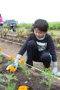 国道4号バイパス沿いを彩る花々 -「小さな親切」運動十和田支部花ロード植栽-_f0237658_17504837.jpg