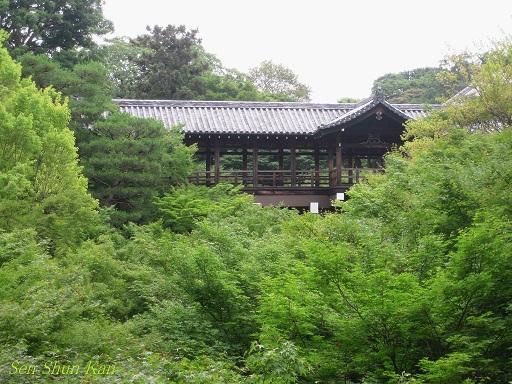 東福寺 緑のもみじ 2012年6月_a0164068_2264154.jpg