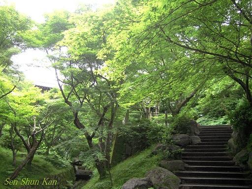 東福寺 緑のもみじ 2012年6月_a0164068_2273077.jpg