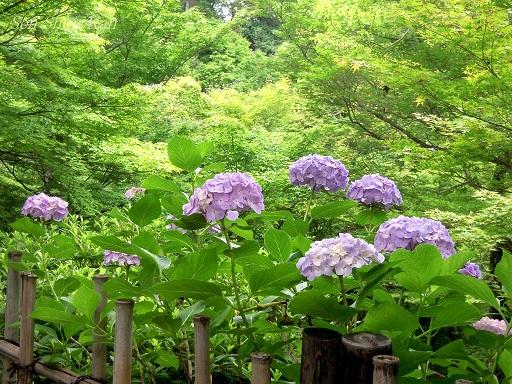 東福寺 緑のもみじ 2012年6月_a0164068_2274966.jpg