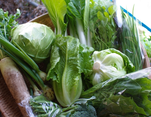 今週の野菜セット(6/19~6/23着)_c0110869_2172764.jpg