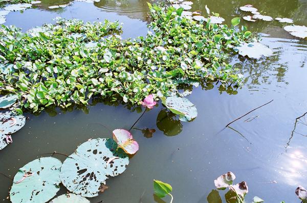 バンコク運河散歩(9)_b0131470_21261636.jpg