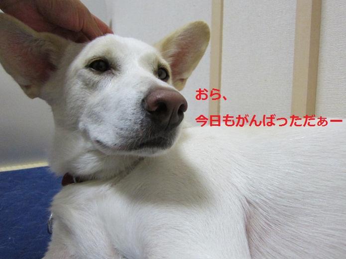 a0132275_1515188.jpg