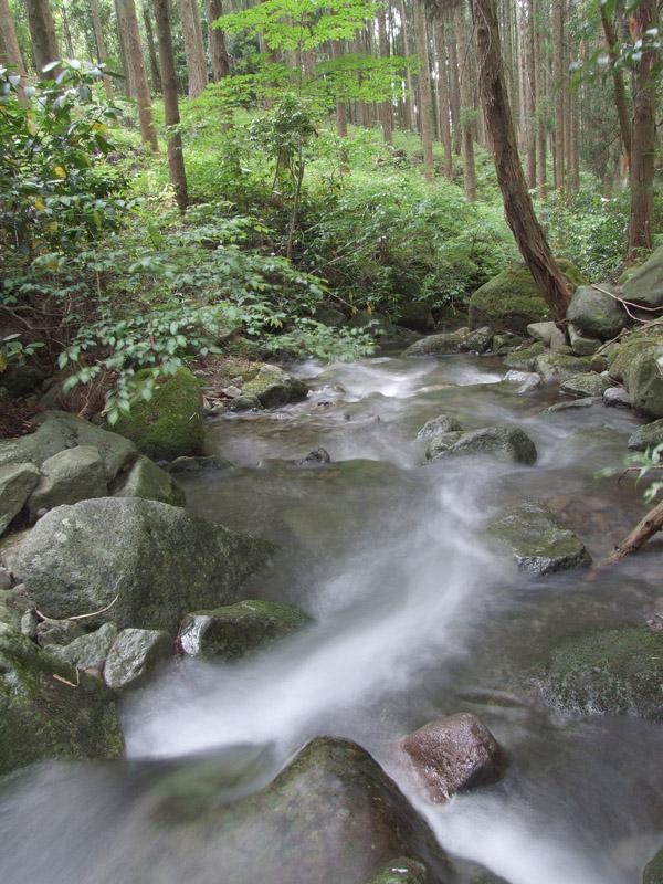 森の潤い_b0188175_7593195.jpg