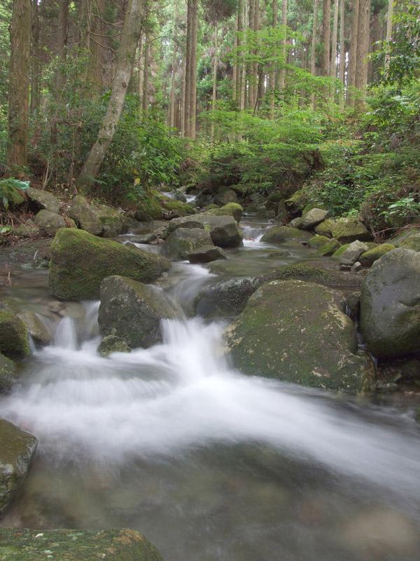 森の潤い_b0188175_7594674.jpg