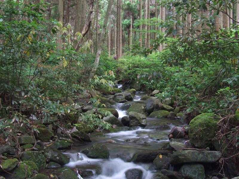 森の潤い_b0188175_80027.jpg