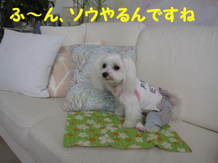 b0193480_1456532.jpg