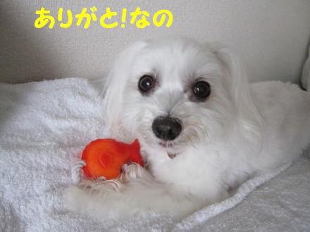 b0193480_1514745.jpg