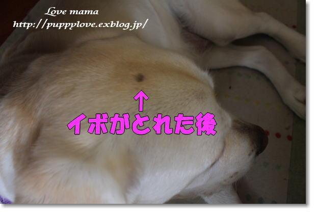 b0136683_9152134.jpg