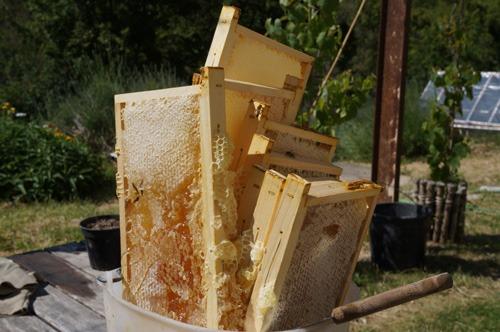 初の自家製蜂蜜を収穫しました♪_f0106597_4313186.jpg