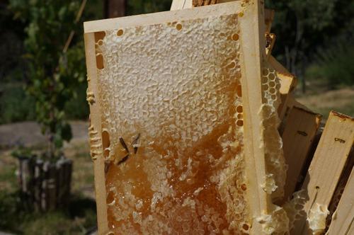 初の自家製蜂蜜を収穫しました♪_f0106597_4335371.jpg