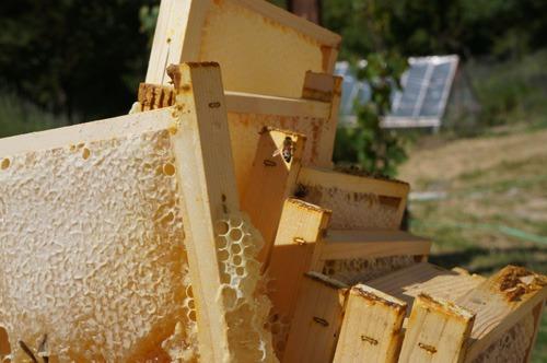 初の自家製蜂蜜を収穫しました♪_f0106597_4362889.jpg
