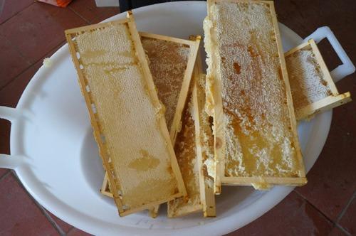 初の自家製蜂蜜を収穫しました♪_f0106597_4404368.jpg